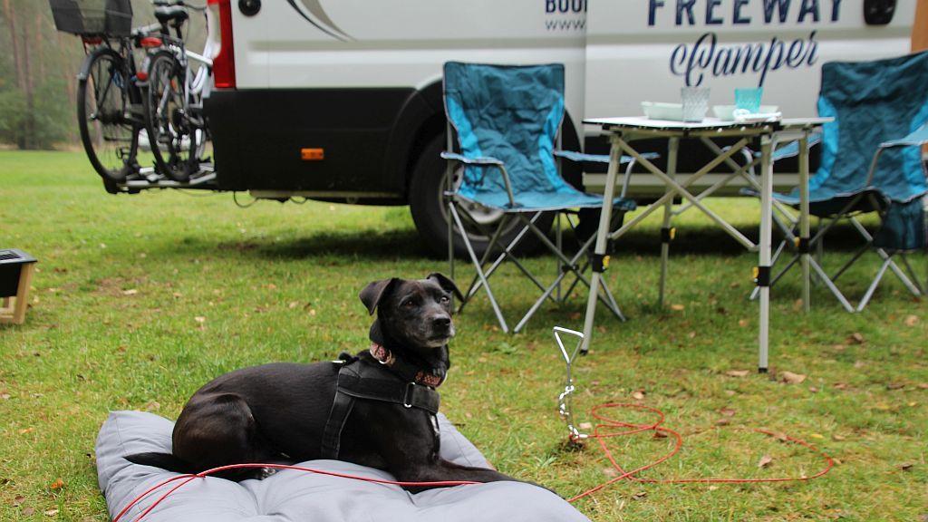 Hundebett zum Campen Pössl Roadcruiser